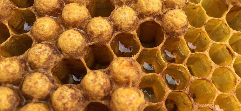 beehive-3335237_1920